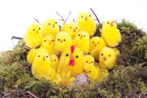 Easter chicks in nest
