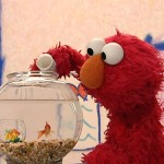 Elmo feeding his pet goldfish Dorothy